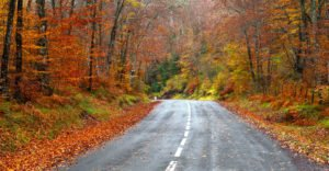 Fall Driving Tips to Stay Safe on the Road