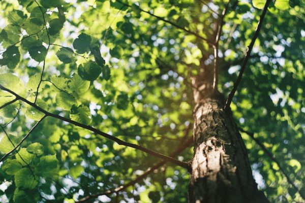 Try Out These Tree Maintenance Tips